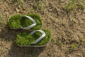 Ecological Impact